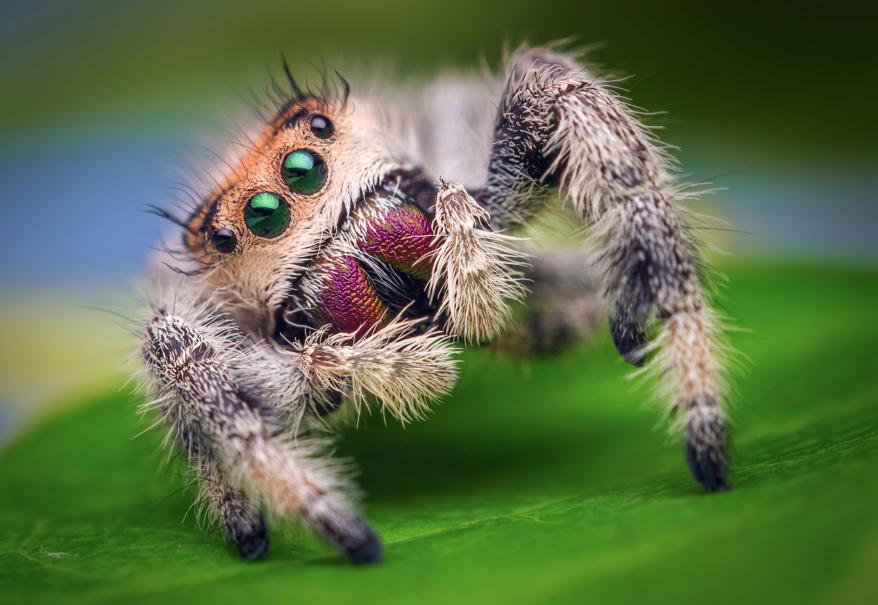 Arachnid still