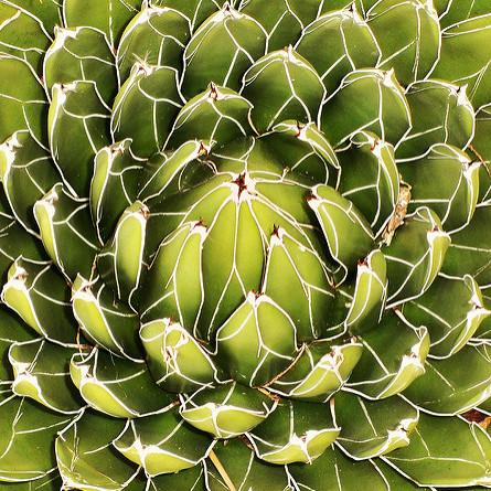 Botany still