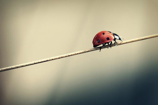 Insect still