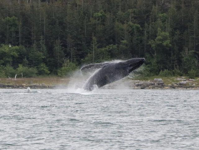 Whale still